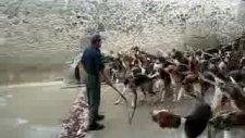 onlarca köpek aynı anda nasıl beslenir