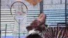hayvanlar oyun havası