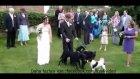 Köpeğin Geline Düğün Hediyesi :)
