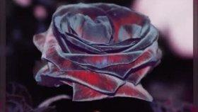 Vuslat Ali - Leylaklar Dökülüp Güller Ağlasın