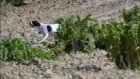 av köpeği eğitim video 4