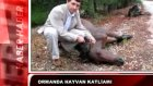 hayvan katliamı