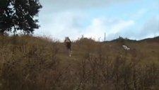 karadeniz dağ köpeği tanıtım klibi