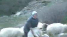 koyun kuzu köy görüntüleri