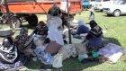 Bezirgan Köyü Kültür Ve Bahar Şenliği Görüntüleri
