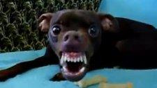 psikopat köpek