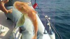 Kusadası Balık Turu Kuşadası Balık Avı