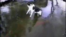 kediye bak buz altndaki balıkları avlamya çalışıyr