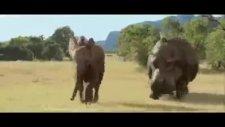 hayvanlar alemi tatilde