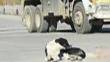 yol ortasında sokak köpeği