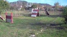 candostumuz köpek eğitim üretim çiftliği