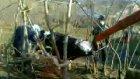 2010 Ordu Kurban Kesimi Kasap Nihat