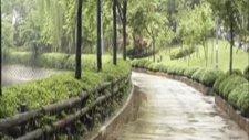 Zamansız Yağmur