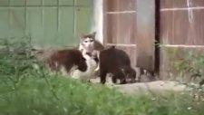 hayvanlar aleminde skandal!