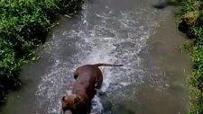 chiko kısa mesafede dalış :))