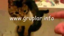 kedinin feci ölümü :( [ 18]