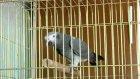süper papağan ezber abi....
