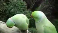 bu kuşlar  çok komik