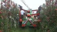 elma toplama makinesi