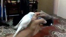 haydut kola içiyor muhabbet kuşu