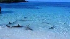 sığ sularda yüzen köpek balıkları
