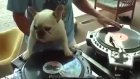 DJ köpek in the house :)