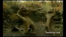 apaçi dans yapan aslanlar
