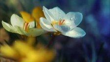 esflora fidancılık ve süs bitkileri
