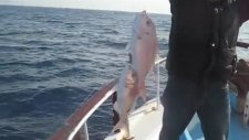 Kuşadası Balık Turu Kuşadasıbalıkturu