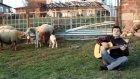 koyunlara kaval çalma devri bitti yeni nesil