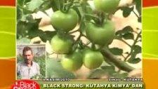 Kütahya Kimya - Black&Strong Domates uygulaması vi