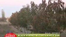 Kütahya Kimya - Black&Strong Kiraz Uygulaması