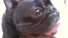 rolantide çalışan köpek   komik video 2011