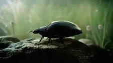 yeni volkswagen beetle