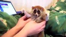 hayvana bak çok tatlı