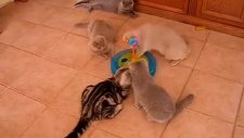kedilerin maçı- tunahan mulla