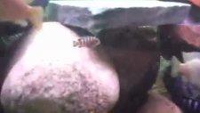 malawi akvaryumum