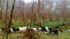 birlik köyü paşalar mahallesi