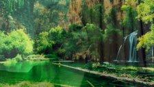 Ayşemumcu Ormancı