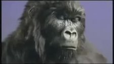 dairy milk / gorilla drummer