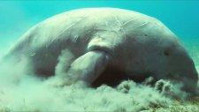 Disney Nature Oceans Featurette Hd 1080p
