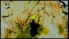 Zeynel Aba - Allı Yeşilli