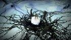 Yıldız Usmanova - Dünya Orjinal Video Klip 2011