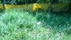 av köpekleri eğitim merkezi