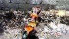 horoz kavgası - 3 - burak demir - osmaniye