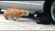 eve gelmeyen karısına hesap soran kedi