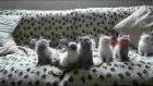 rapci kediler çok tatlı