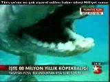 80 milyon asırlık köpek balıgı :(