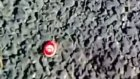 vatnsever karınca