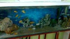 akvaryum dünyası - buyrun benim odam